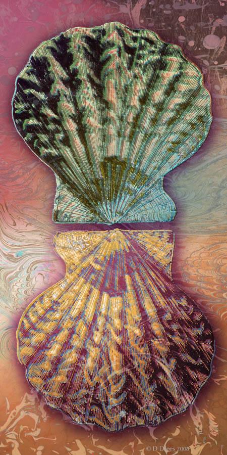 Pilgrim Shells ©2008 Dedree Drees