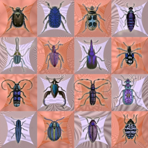 Fondness for Beetles- Peach and Violet